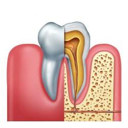 Logiciel DentalActs
